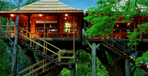 Looking To Stay in A Tree House in Kerala? Here are 15 Best Tree House Resorts
