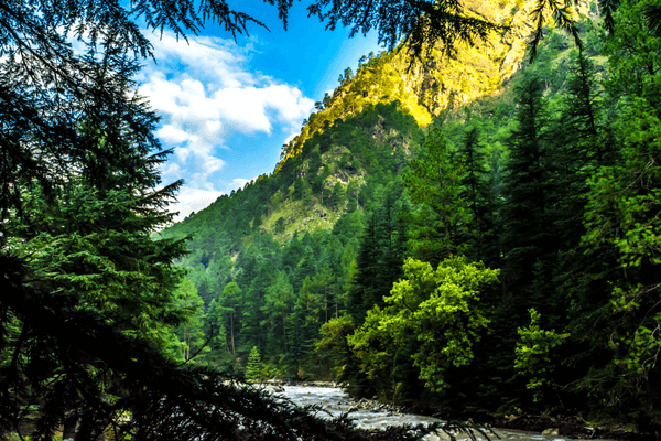 Himachal Pradesh forest area