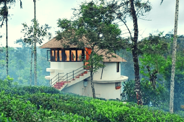 Tree House in Kerala - Best Honeymoon Destination