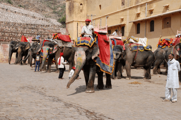 Elephant Farm in Jaipur, Golden Triangle Tour