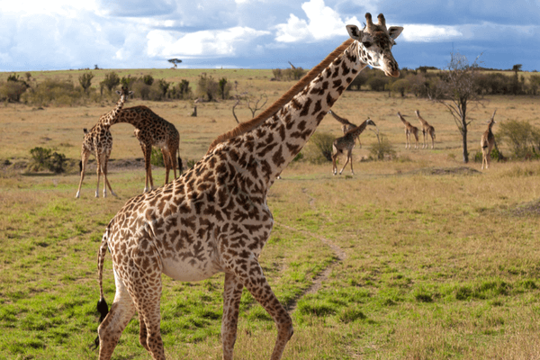 Masai Mara National Park, Kenya, Best Honeymoon Destination