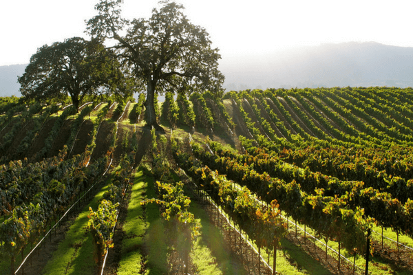 Sonoma, California, Best Honeymoon Destination