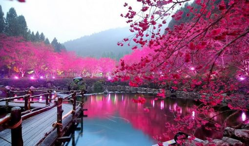 Cherry Blossom Festival In Japan Is Something We Bet You Don't Want To Miss