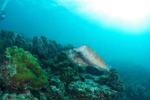 Marine Life Of Hin Bida - 100 Places To Visit In Thailand