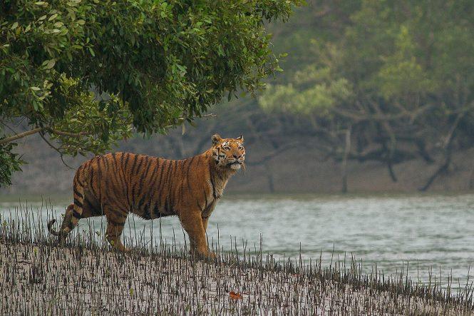 Sundarban - Places to visit in Kolkata