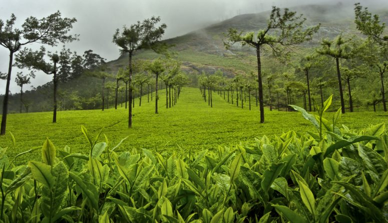 6 Remarkable Wayanad Tourist Places You Cannot Miss
