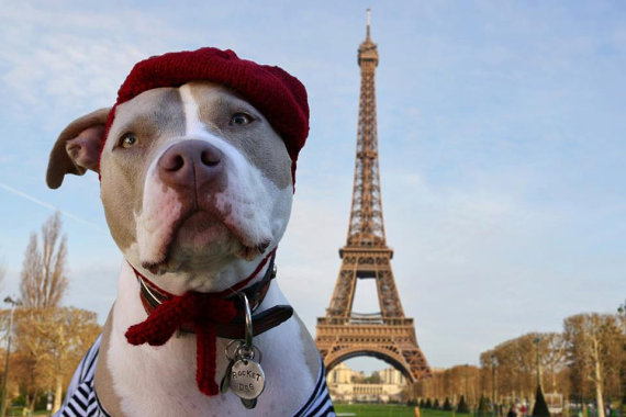11 Best Places To Visit With Your Pet