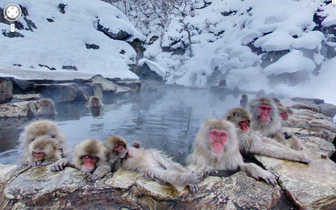 Jigokudani Monkey Park-things to do in Japan