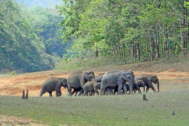 Neyyar Dam & Wildlife Sanctuary-Places to visit in Trivandrum