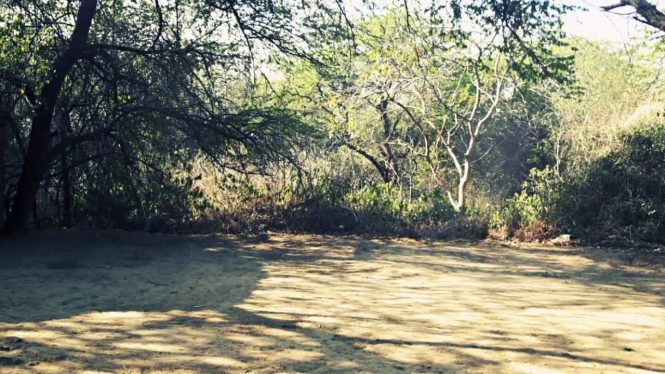 Sanjay Van-haunted places in India