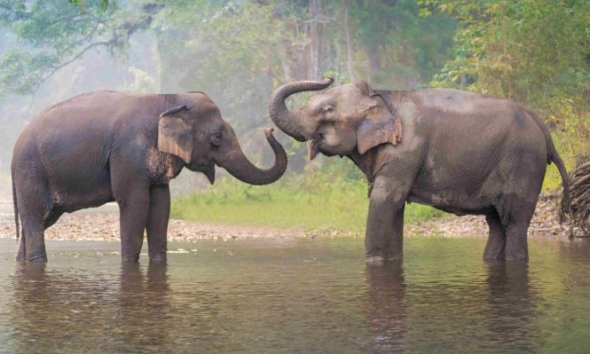 An Elephant-astic Experience - things to do in Thailand