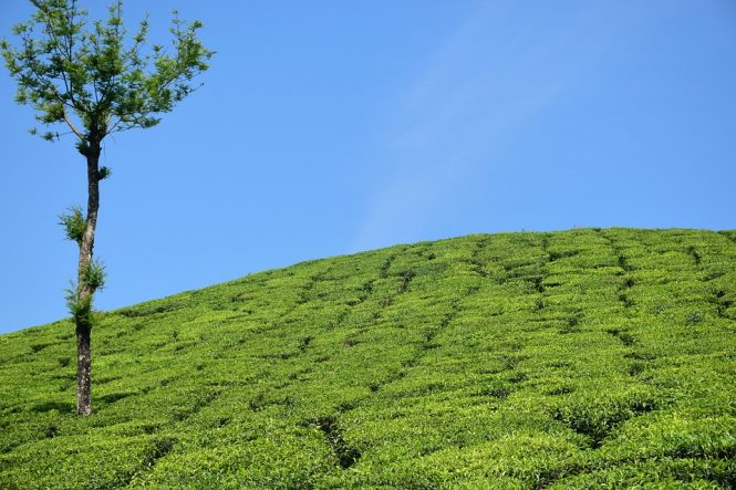 Munnar - Places to visit in Kerala