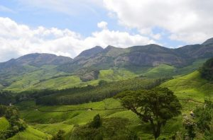 Minnar - 7 Most Beautiful Honeymoon Places in South India