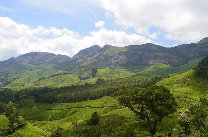 Munnar - Honeymoon Places in South India