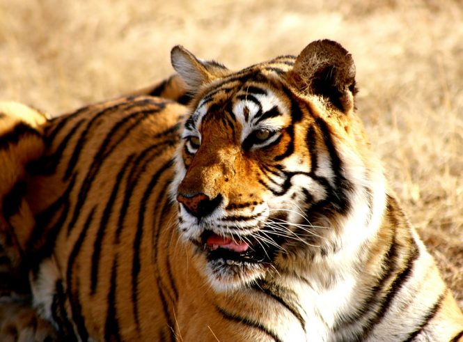 Zoo-places to visit in nainital