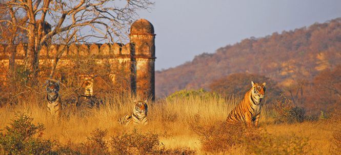 Ranthambore Tiger Reserve - national parks in india