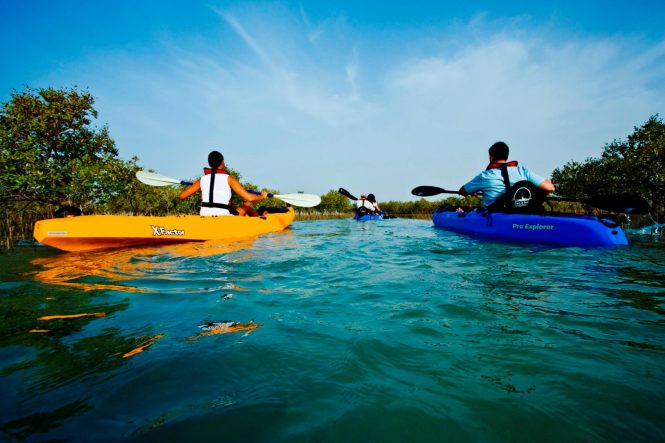 The Mangrove National Park - Places to see in Abu Dhabi