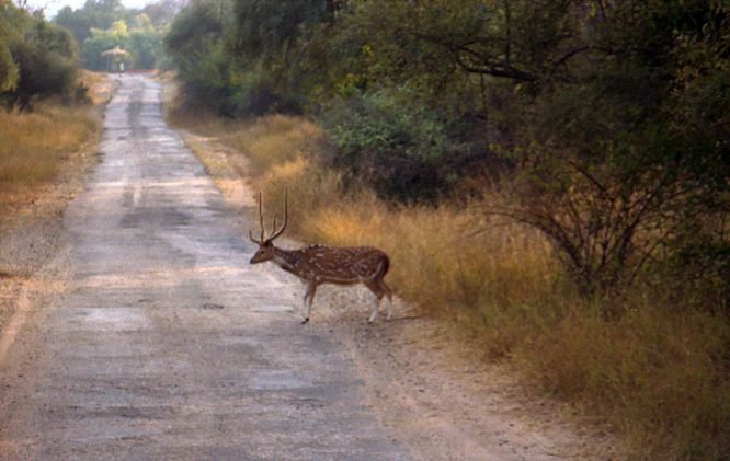 Sariska Wildlife Sanctuary - national parks in india