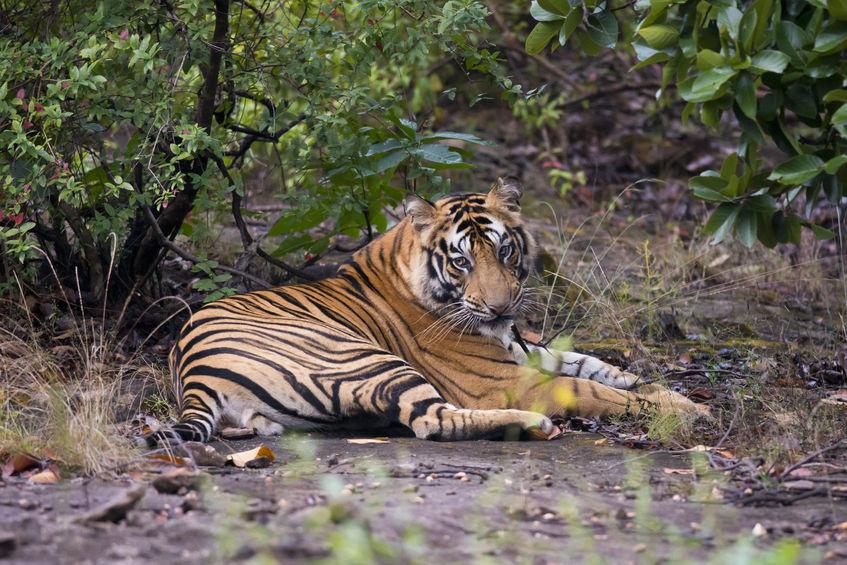 Bandhavgarh- Madhya Pradesh's wildlife