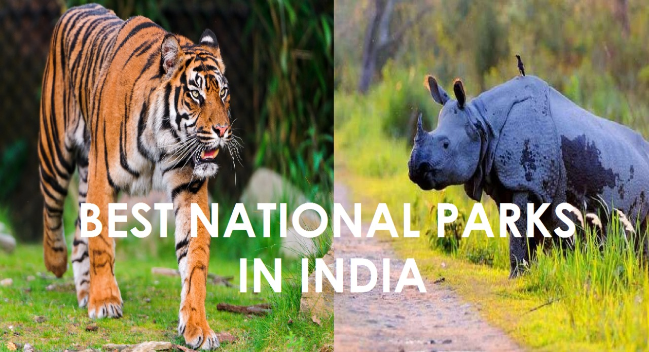 21 National Parks in India For All The Wildlife Enthusiasts