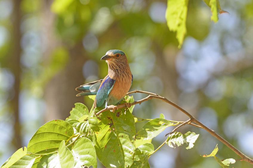 Kanha- Madhya Pradesh's wildlife