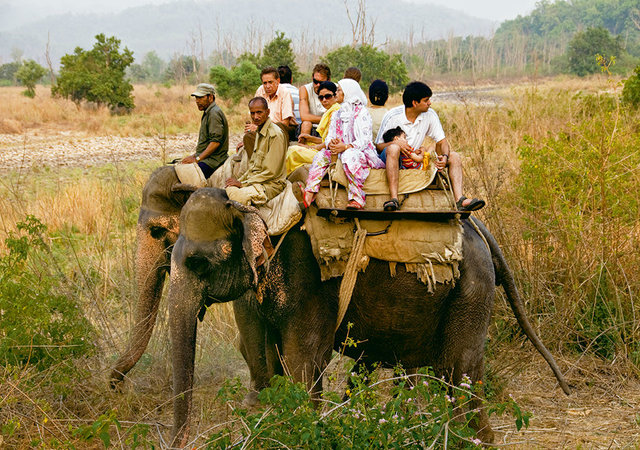 Elephan Safaris- Adventure Activities in Uttarakhand