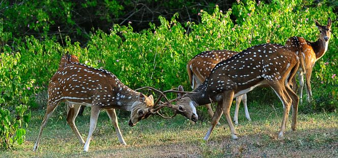 Bandipur National Park - National parks in india