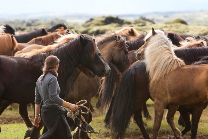 Icelandic horse- things to do in Iceland