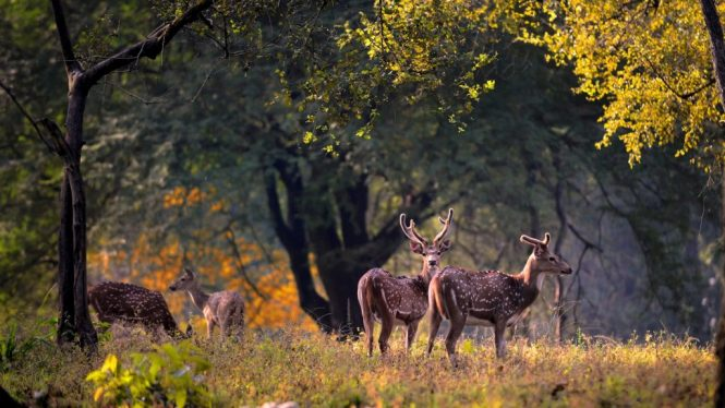 Kanha National Park - national parks in india