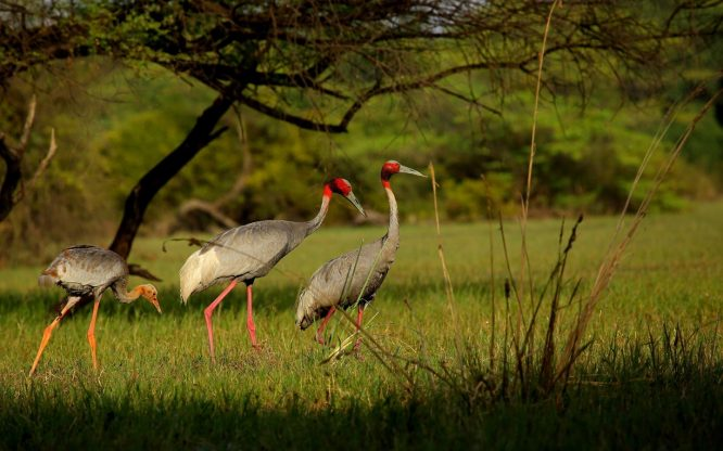 Keoladeo National Park, Bharatpur - National Parks In India