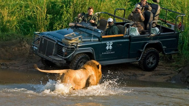 Wildlife Safaris In South Africa A Perfect Wilderness To