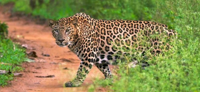 Nagarhole National Park - National parks in India