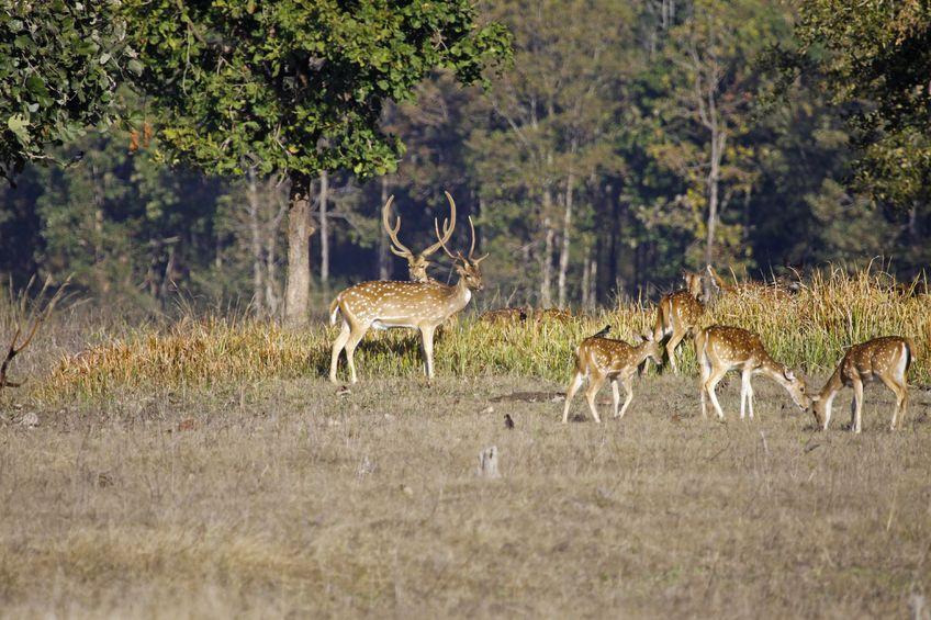 Satpura- Madhya Pradesh's wildlife
