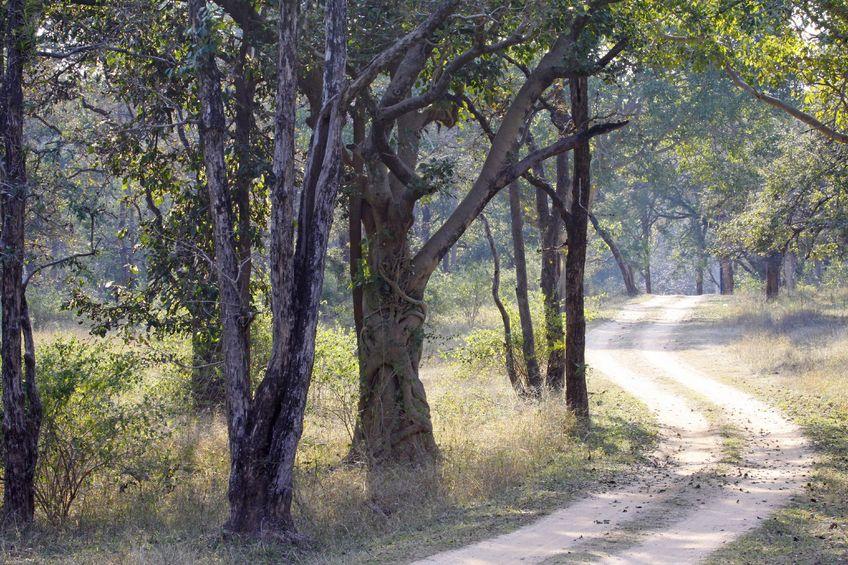 Madhya Pradesh's wildlife