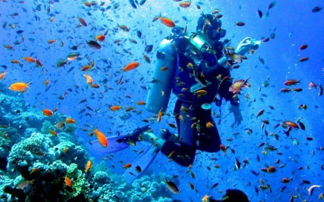 Underwater scenario-Andaman adventures