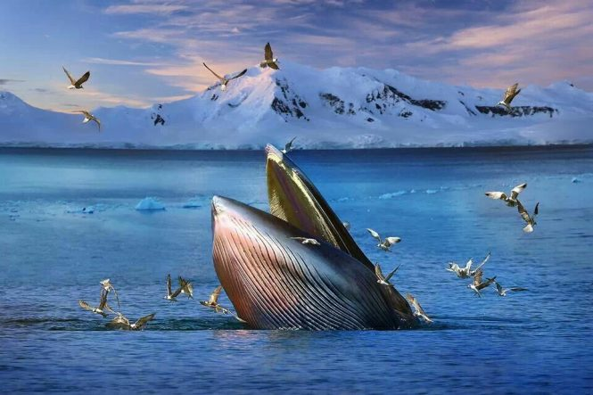 whales- things to do in Iceland