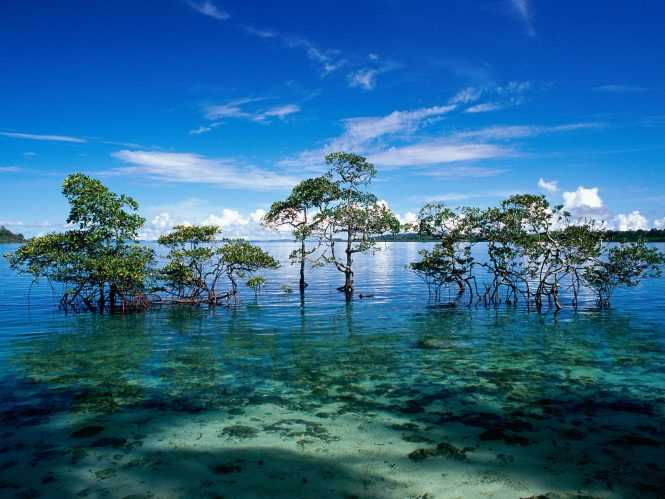 Andaman and Nicobar Islands- Beach Destinations in India for Honeymoon