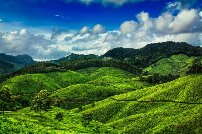 Munnar- Best Budget Destinations in India for Honeymoon
