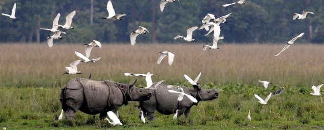 Kaziranga National Park - National Parks in India