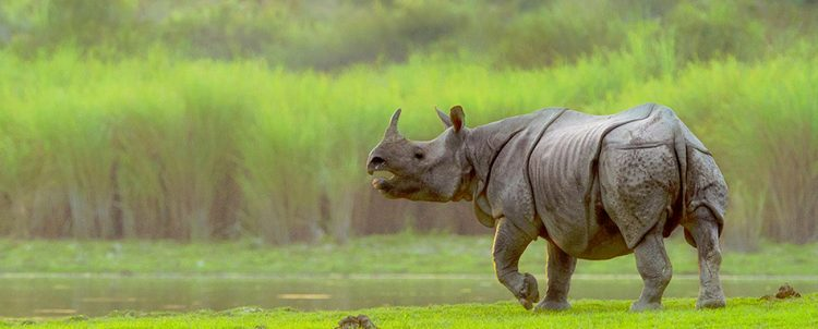 Kaziranga National Park- Places to visit in North East