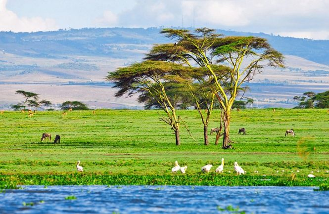 Lake Naivasha - Places to visit in Kenya