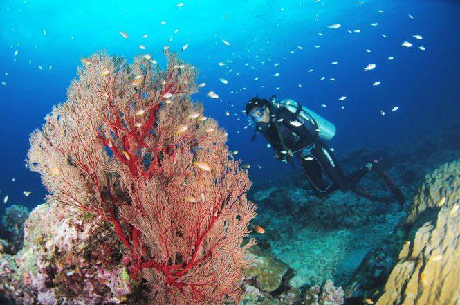 Snorkeling- Andaman adventures