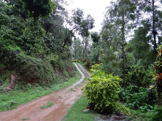 Coorg- Places to visit in India during Monsoon