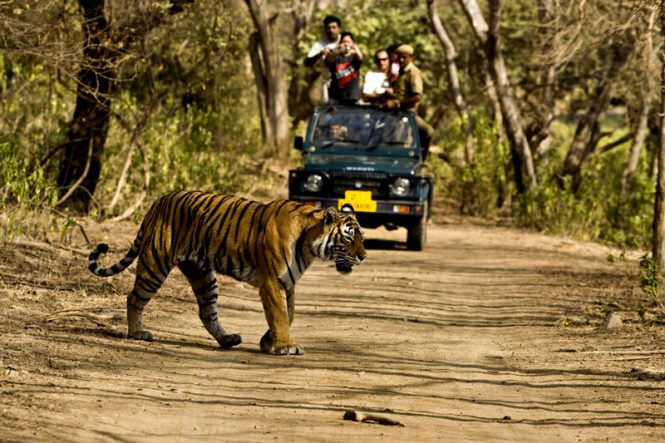 Jim corbett- Tourist places in India