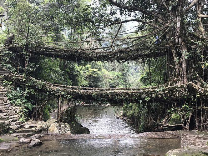Living Root Bridge - cherrapunji