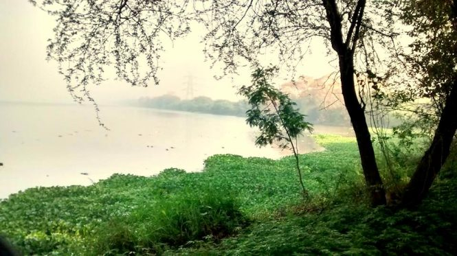 The Okhla Bird Sanctuary- Places to visit in India during Monsoon