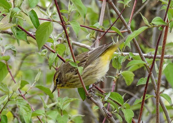 Bird Watching-Living Root Bridges