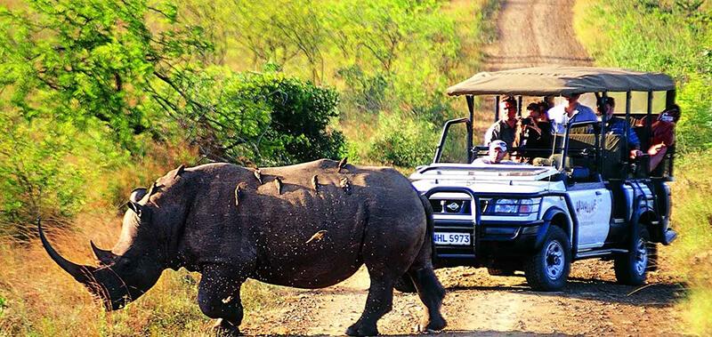 Safari-Kaziranga Tourism