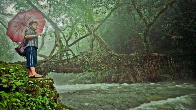 Trekking and Nature Walk-Living Root Bridges