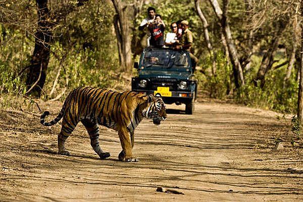 Jungle Safari-Jim Corbett National